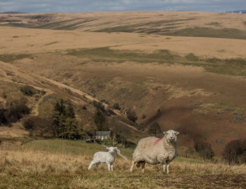 Hill Farming: Change and Continuity